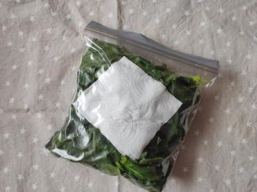 conservar hoja verde