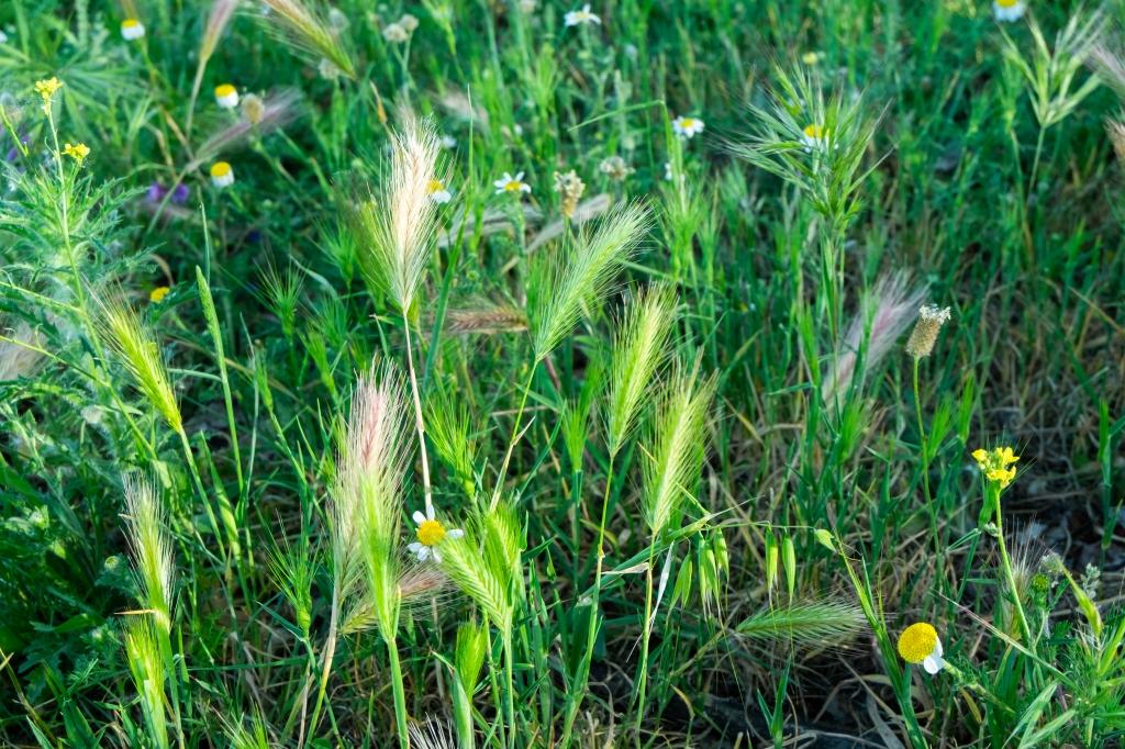 curso plantas silvestres comestibles medicinales asociacion cantharellus
